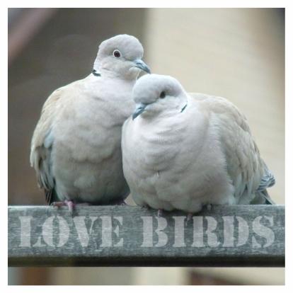 felicitatiekaart-lovebirds